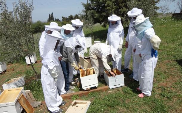 Αιτήσεις συμμετοχής για δωρεάν εκπαίδευση στη Μελισσοκομία και στο Θερινό σχολείο από το πρόγραμμα